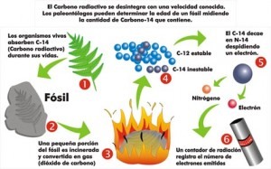 Datación por radiocarbono